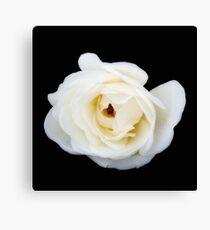 White rose. Canvas Print