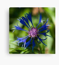 Blue flower in sunlight Canvas Print