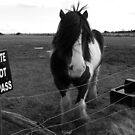 No trespassing by Niamh Harmon