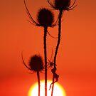 Winters Glow . by Jon Baxter