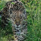 Jaguar Stalking von JMChown