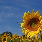Sunny Sonnenblume Solist (mit Backup Chor) von rvjames
