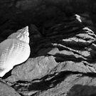 Shell and Slate by christymcnutt