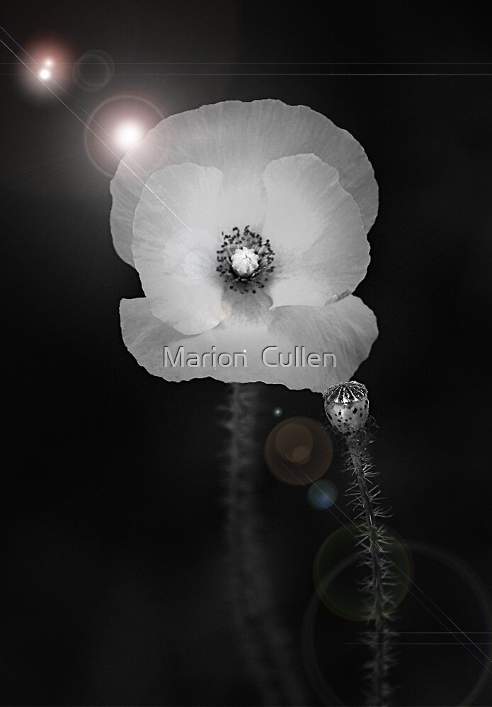 Super Trouper by Marion  Cullen