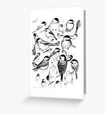 Chickadee Study Greeting Card