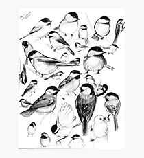 Chickadee Study Photographic Print