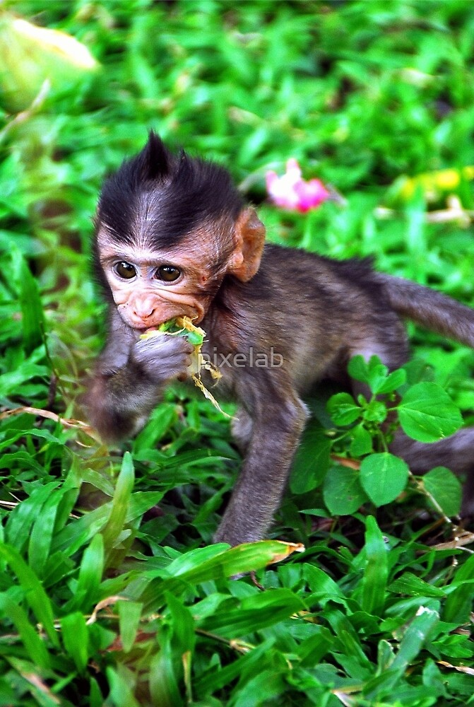 BABY MONKEY by pixelab