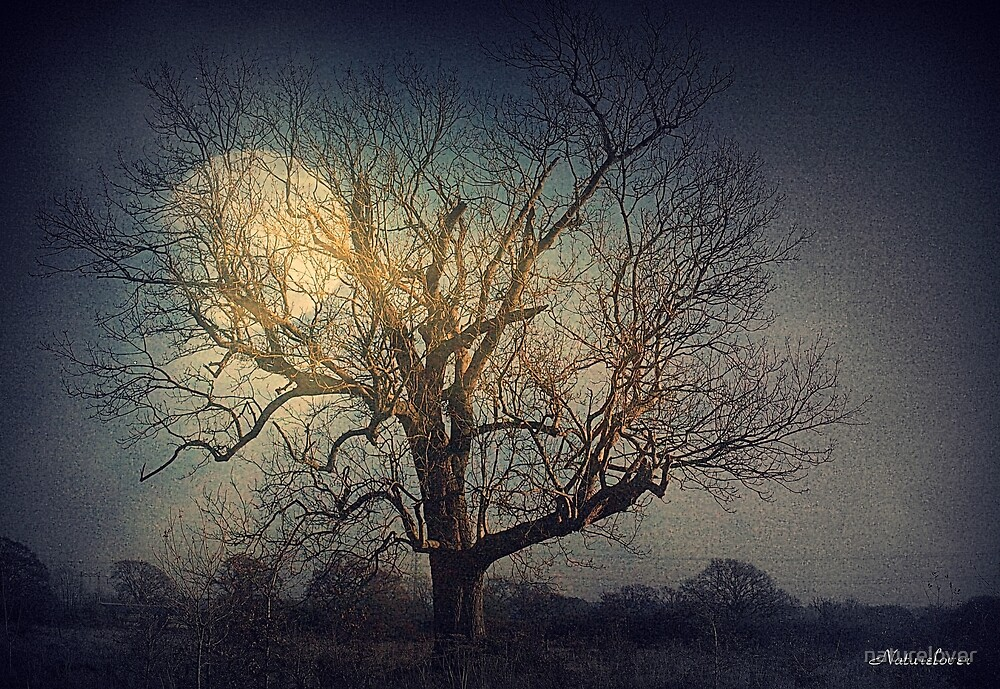 Out With The Old by naturelover