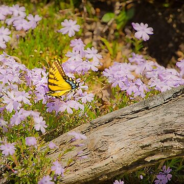 A Butterfly's Life by ShirleyTinkham