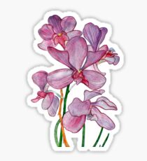 Tropical Pink Ochid Flowers Sticker