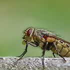 Fly Profile by relayer51