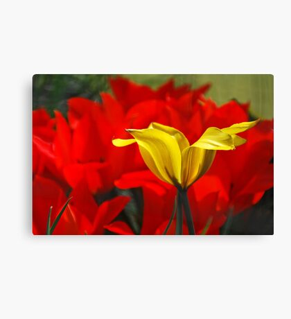 spring capers Canvas Print