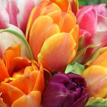 tulips by fourretout