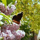 My beautiful butterfly by Michael Degenhardt