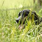 Toddy in the grass  by yampy