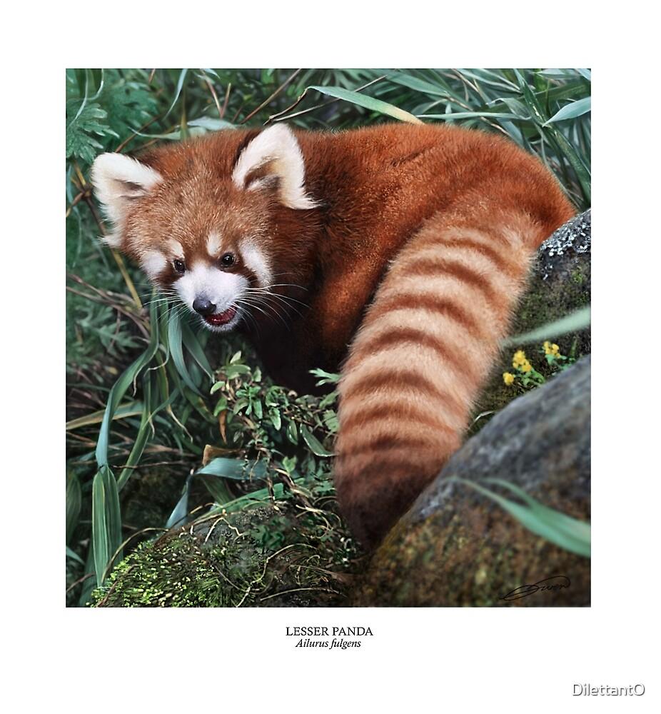 LESSER PANDA (Ailurus fulgens): (NOT A PHOTOGRAPH) by DilettantO