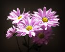 Flowers by G. David Chafin