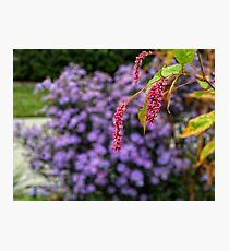 Pink and purple plants Photographic Print