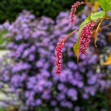 Pink and purple plants by 8kPzGZjJ20Rj