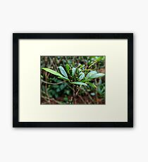 Rhododendron plant photo Framed Print