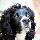 Cocker Spaniel Dog by Leon Woods