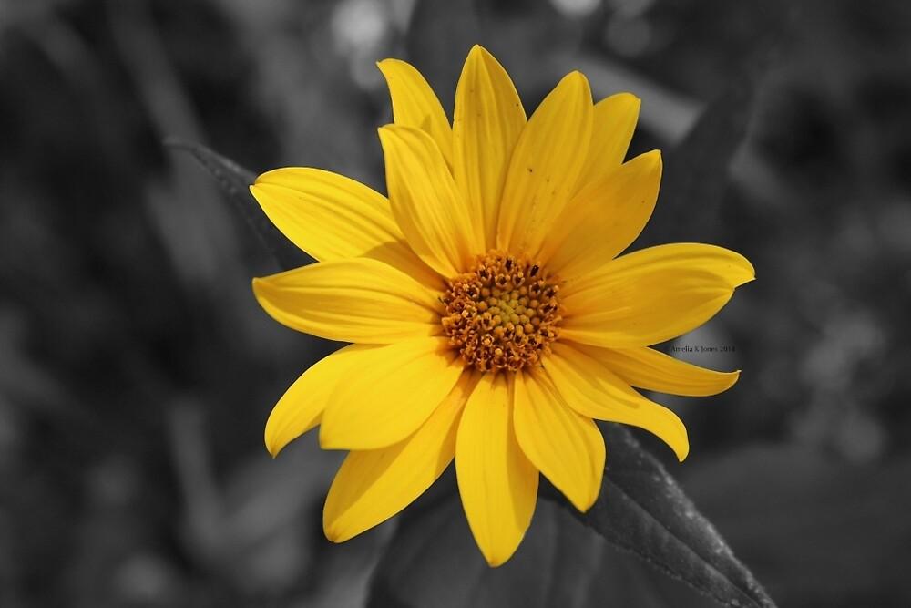 Yellow Flower by JunkyardFox