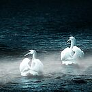 White Swans by Darlene Lankford