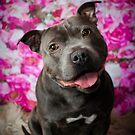Dylan / Staffordshire Bull Terrier by Peggy Colclough