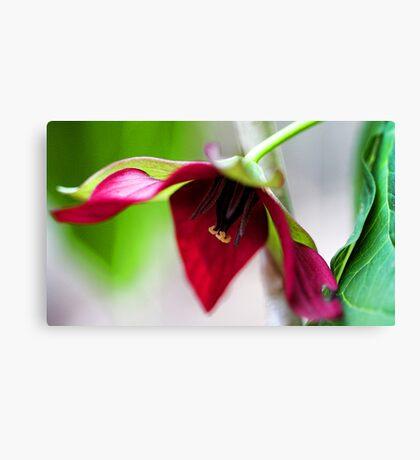 Deep Red Trillium Canvas Print
