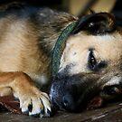 Hund - Strßenhund von laura-S