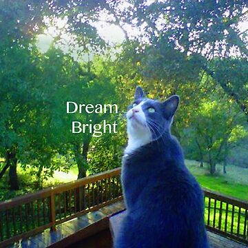 Dream Bright Cat by marlatoddkings