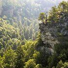 The Cliffs at Fall Creek Falls by LarryB007
