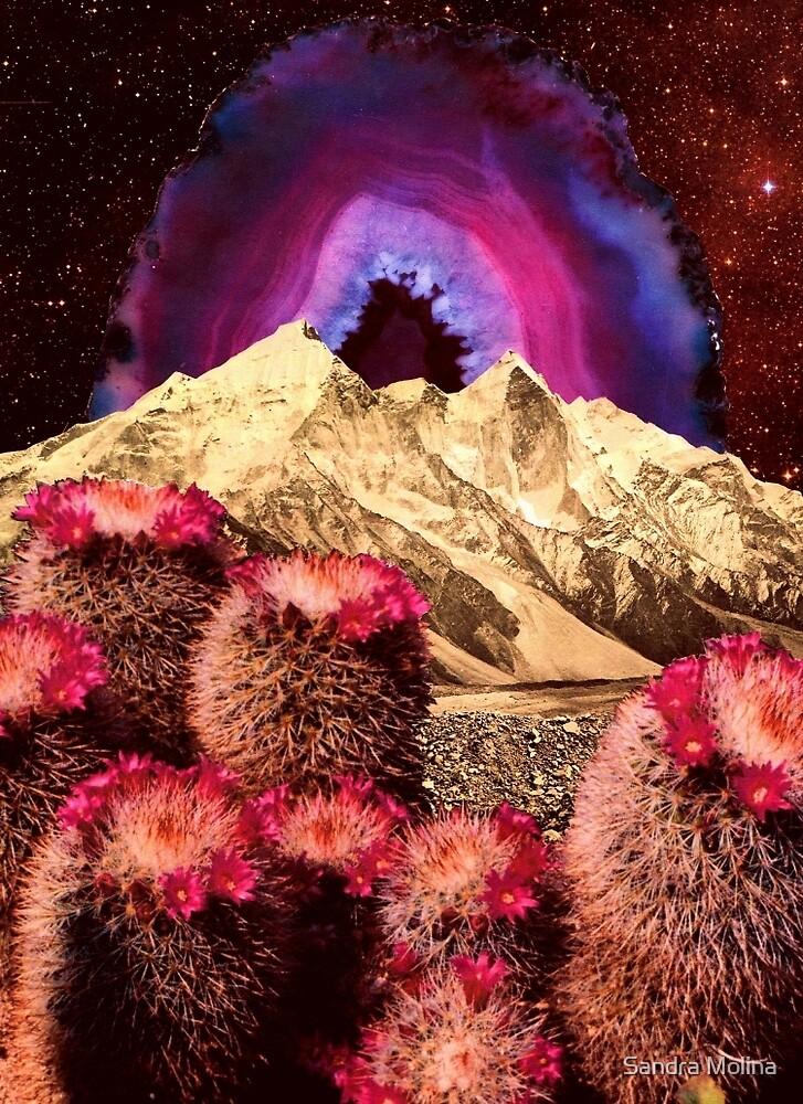 Cactus Mountain by Sandra Molina