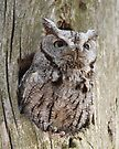 Who Gives a Hoot! by Todd Weeks