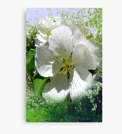 Apple Tree and Blossoms Canvas Print