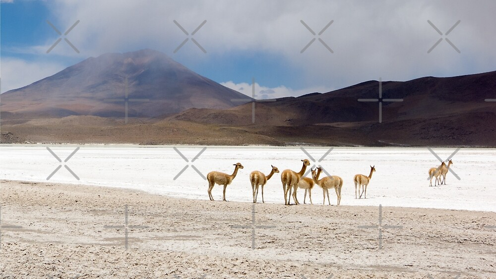 Vicuñas in the lagoon of Andes in Bolivia by Wanderlust40