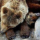 Bearly asleep by Alan Mattison
