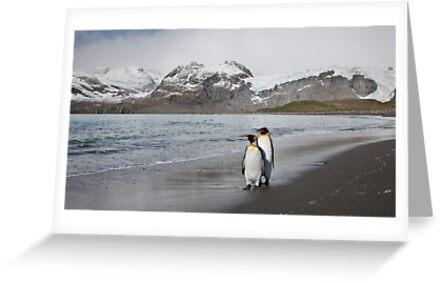 King Penguins by Schalk Marais