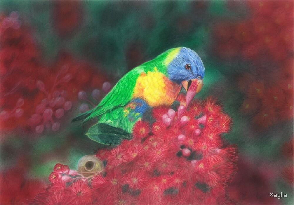 Rainbow Lorikeet by Xaylia