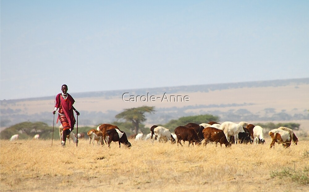 Quot Maasai Or Masai Herder With Cattle Tanzania Quot By