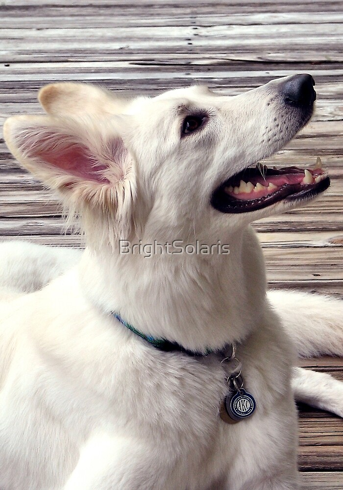 Side View White German Shepherd Dog by BrightSolaris
