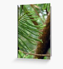 Norfolk Island Pine - 7 Mile Beach, Forster NSW Greeting Card