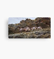 Otter family Canvas Print