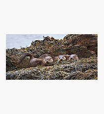 Otter family Photographic Print
