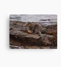 Otter with crab Canvas Print
