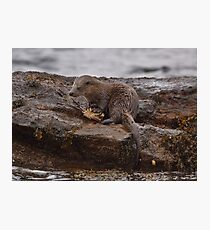Otter with crab Photographic Print