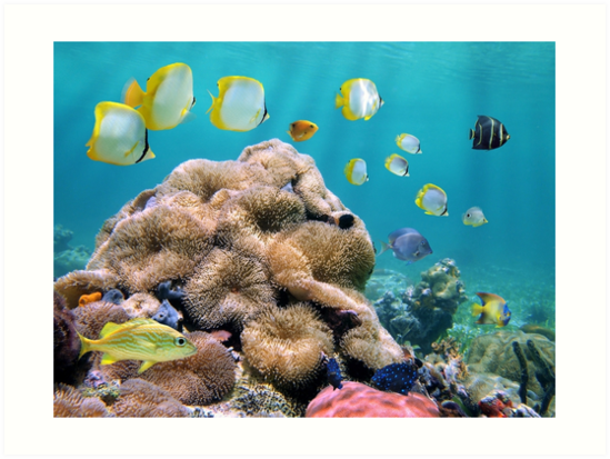 Colorful tropical fish with sea anemones underwater by Dam - www.seaphotoart.com