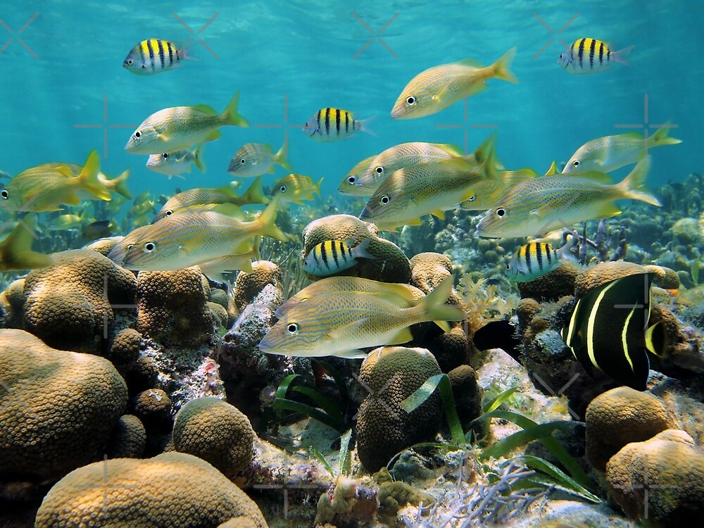 School of tropical fish in a shallow coral reef by Dam - www.seaphotoart.com