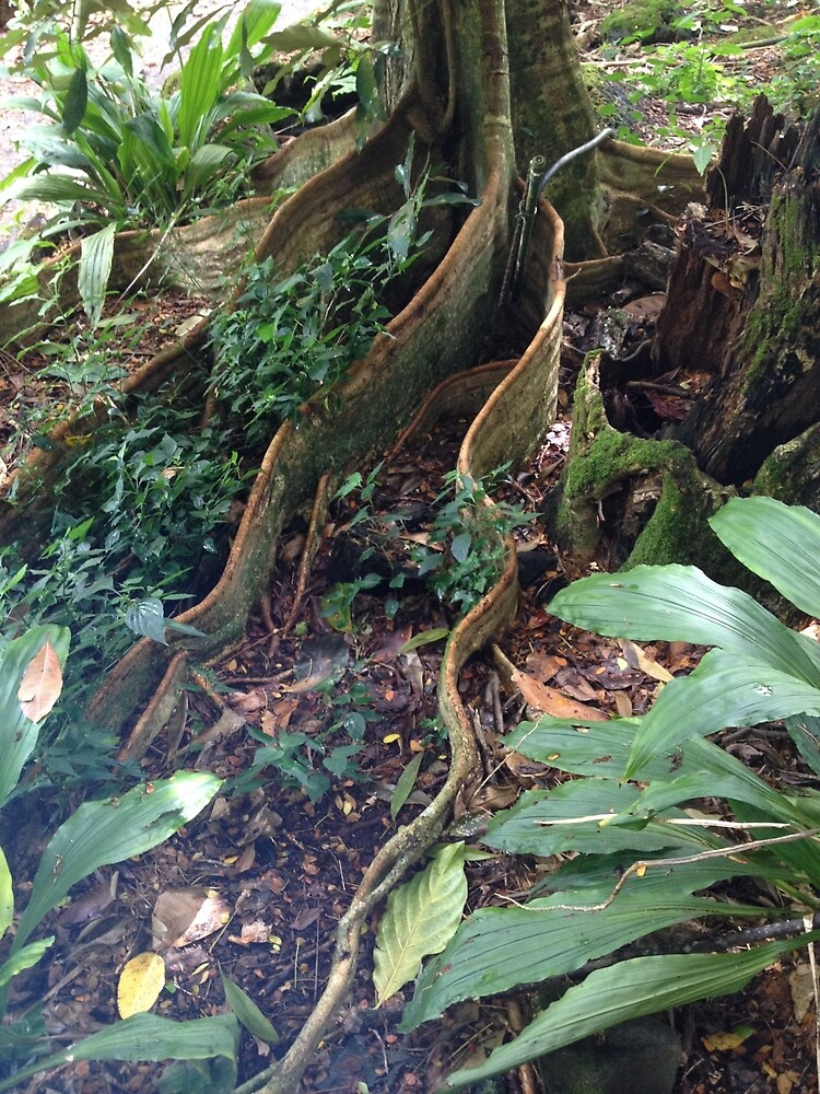 Wicked Tree Roots by Mommabec