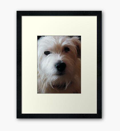 'Alfie' Framed Print